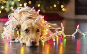 Новогодние каникулы в 2017 году сократят