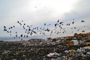 Повысить тарифы за счет вывоза мусора пытаются УК Бердска