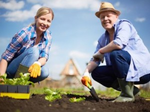 В Кузбассе снизят тариф на электроэнергию для дачников и садоводов