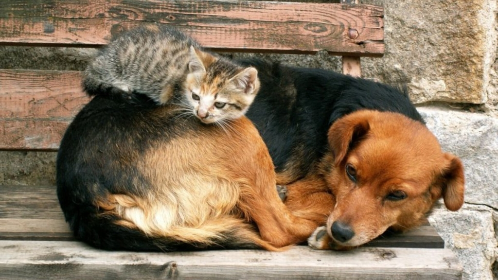 В Пензе пересмотрят тарифы на отлов безнадзорных животных