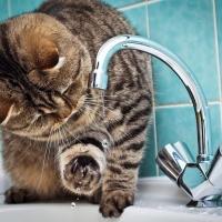 Стал известен график отключения горячей воды в Сургуте летом 2020 года