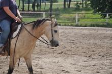 Стала известна средняя стоимость конной прогулки в Петербурге