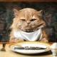 Как выбрать корм для кошки? Советуют ветеринары